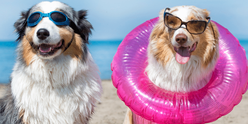 Hundeurlaub am Strand
